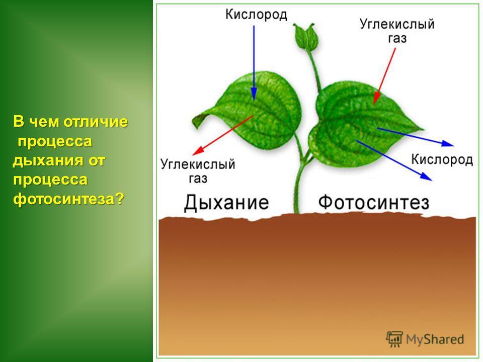 В чем отличие процесса процесса дыхания от процесса фотосинтеза?