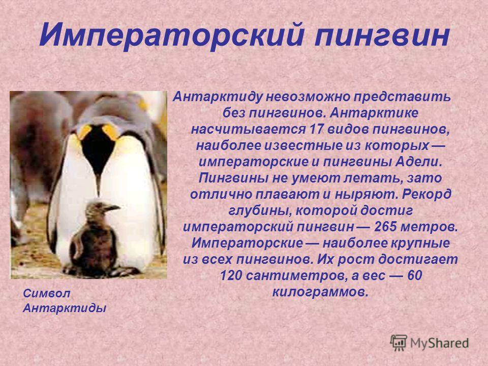 Императорский пингвин Антарктиду невозможно представить без пингвинов. Антарктике насчитывается 17 видов пингвинов, наиболее известные из которых императорские и пингвины Адели. Пингвины не умеют летать, зато отлично плавают и ныряют. Рекорд глубины,