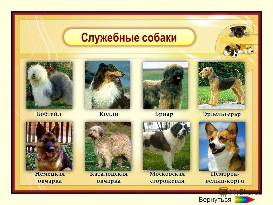 Служебные собаки Вернуться