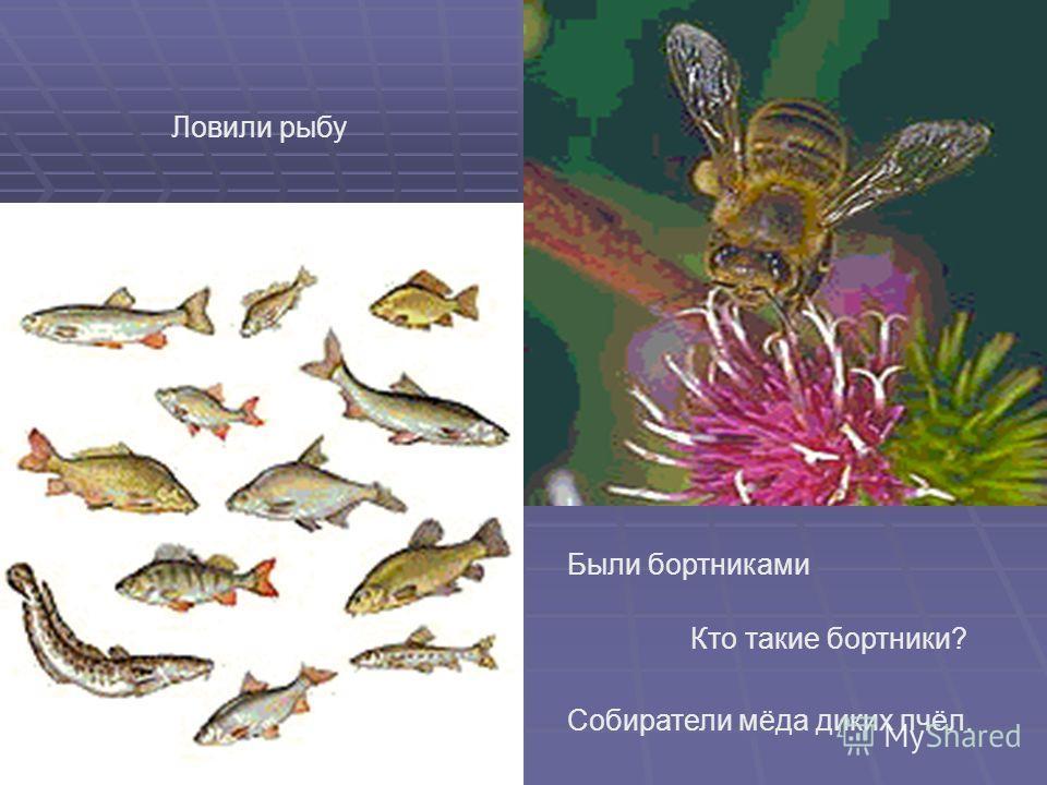как славяне ловили рыбу