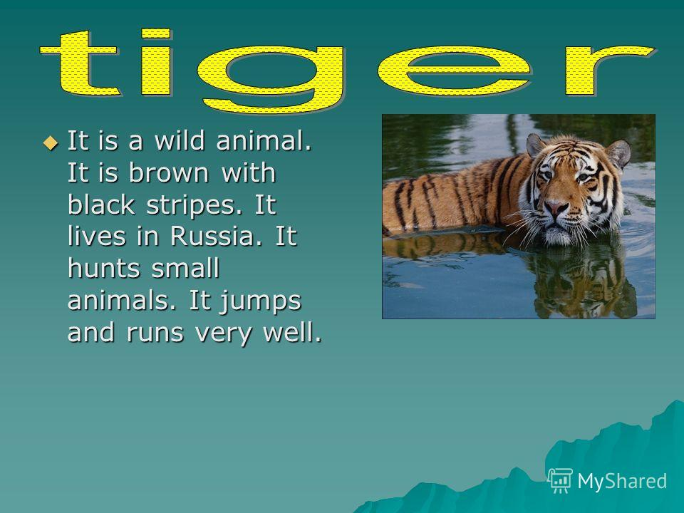 It is a wild animal. It is brown with black stripes. It lives in Russia. It hunts small animals. It jumps and runs very well. It is a wild animal. It is brown with black stripes. It lives in Russia. It hunts small animals. It jumps and runs very well