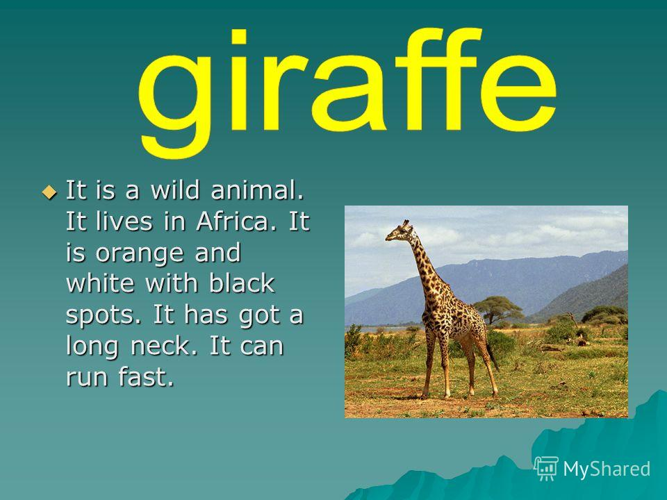 It is a wild animal. It lives in Africa. It is orange and white with black spots. It has got a long neck. It can run fast. It is a wild animal. It lives in Africa. It is orange and white with black spots. It has got a long neck. It can run fast.