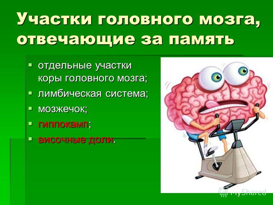 Участки головного мозга, отвечающие за память отдельные участки коры головного мозга; отдельные участки коры головного мозга; лимбическая система; лимбическая система; мозжечок; мозжечок; гиппокамп; гиппокамп; височные доли. височные доли.