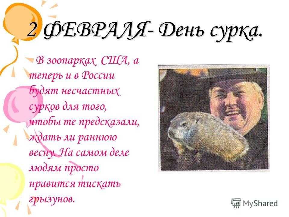 2 ФЕВРАЛЯ- День сурка. В зоопарках США, а теперь и в России будят несчастных сурков для того, чтобы те предсказали, ждать ли раннюю весну. На самом деле людям просто нравится тискать грызунов.