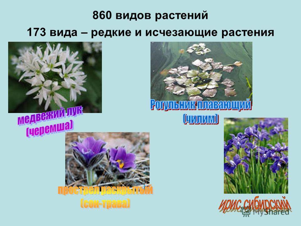 вымершие растения названия и фото