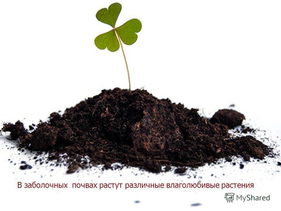 Скачать дерево на крыше fb2 Виктория Самойловна Токарева