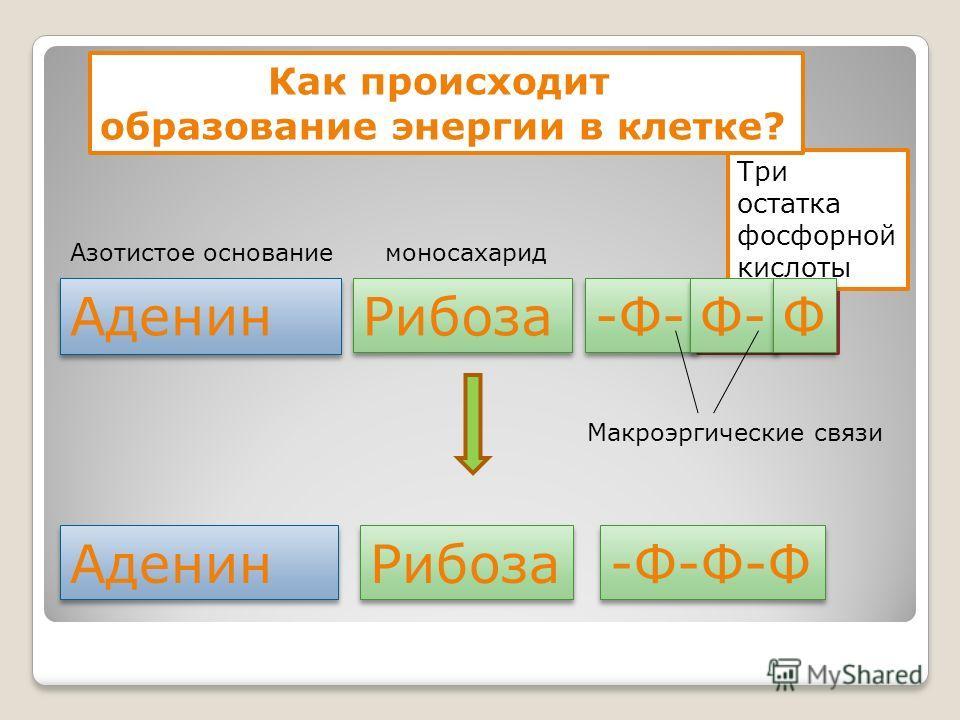 40 кДж 40 кДж Три остатка фосфорной кислоты Аденин Рибоза -Ф- Как происходит образование энергии в клетке? Ф- Ф Ф Аденин Рибоза -Ф-Ф-Ф моносахаридАзотистое основание Макроэргические связи