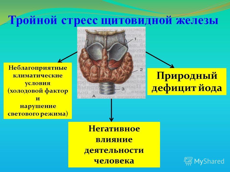 Тройной стресс щитовидной железы Неблагоприятные климатические условия (холодовой фактор и нарушение светового режима) Негативное влияние деятельности человека Природный дефицит йода