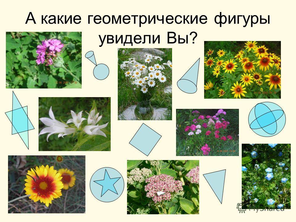 А какие геометрические фигуры увидели Вы?