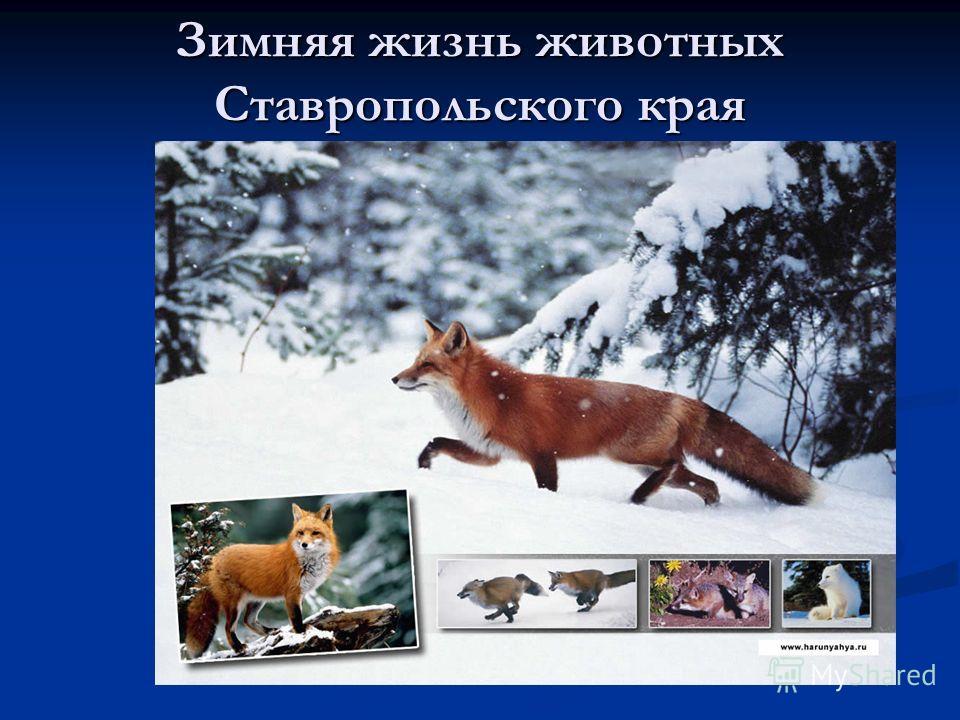 Зимняя жизнь животных Ставропольского края