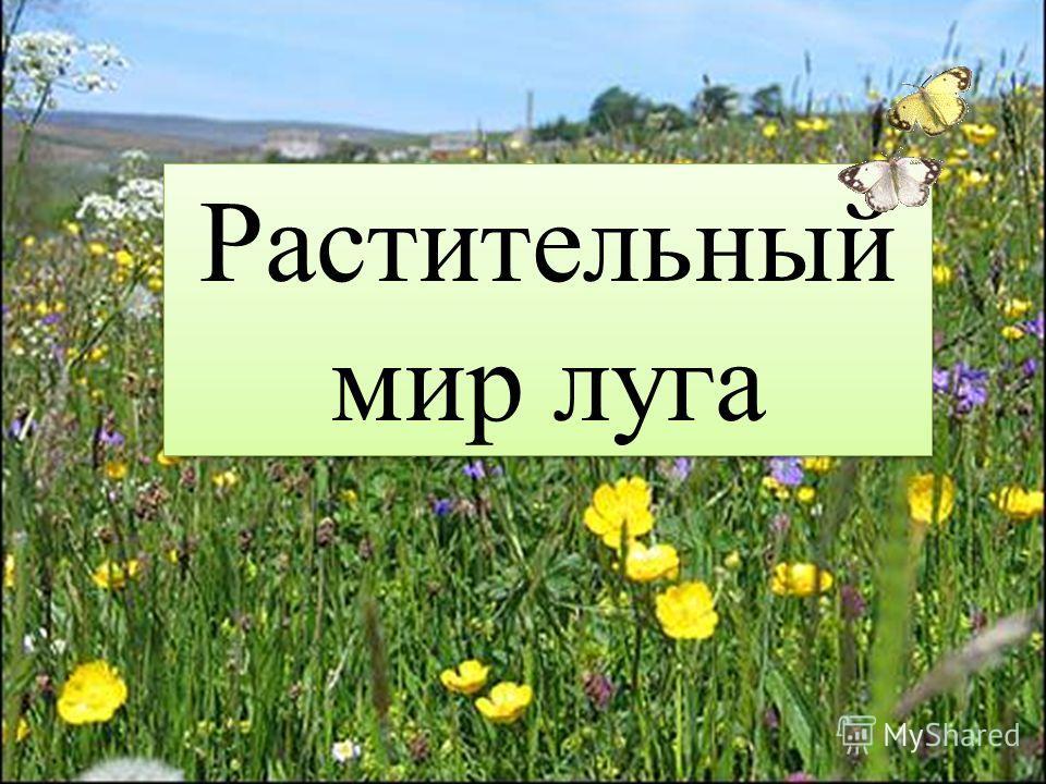 Растительный мир луга растительный