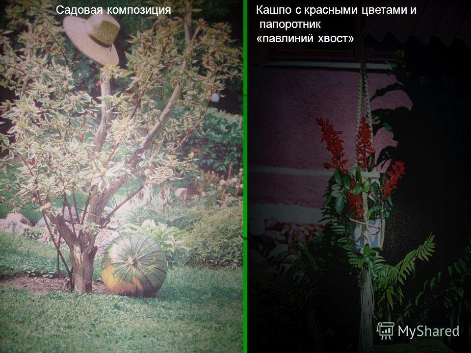 Садовая композицияКашпо с красными цветами и папоротник «павлиний хвост»