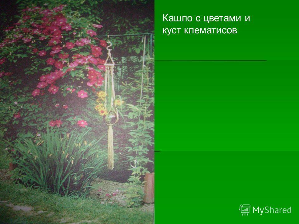 Кашпо с цветами и куст клематисов