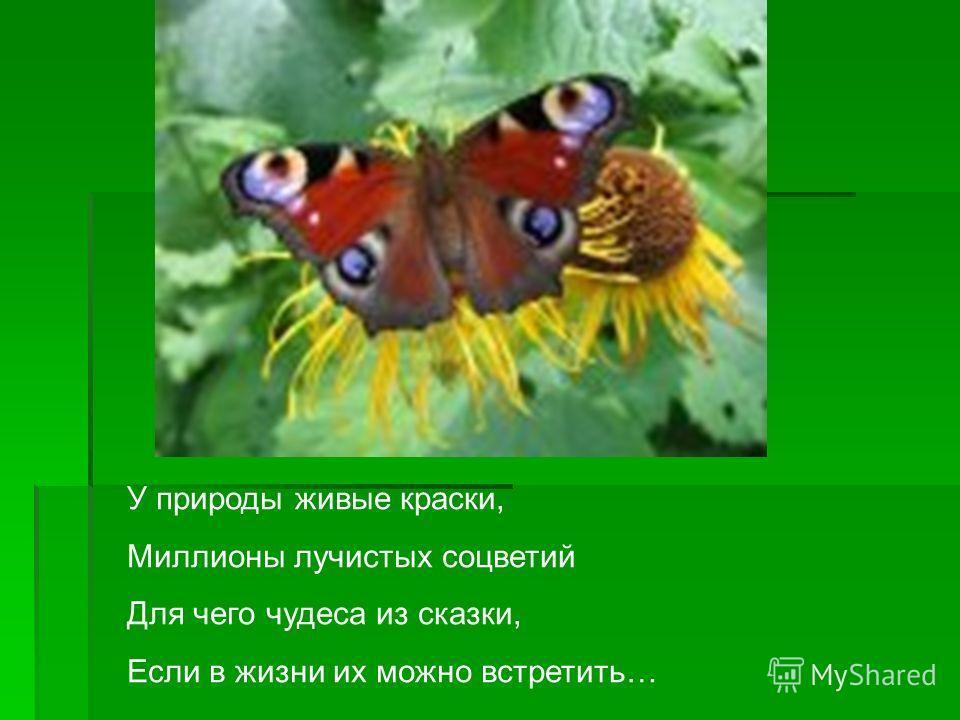 У природы живые краски, Миллионы лучистых соцветий Для чего чудеса из сказки, Если в жизни их можно встретить…
