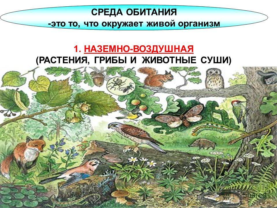 СРЕДА ОБИТАНИЯ -это то, что окружает живой организм 1.НАЗЕМНО-ВОЗДУШНАЯ (РАСТЕНИЯ, ГРИБЫ И ЖИВОТНЫЕ СУШИ)