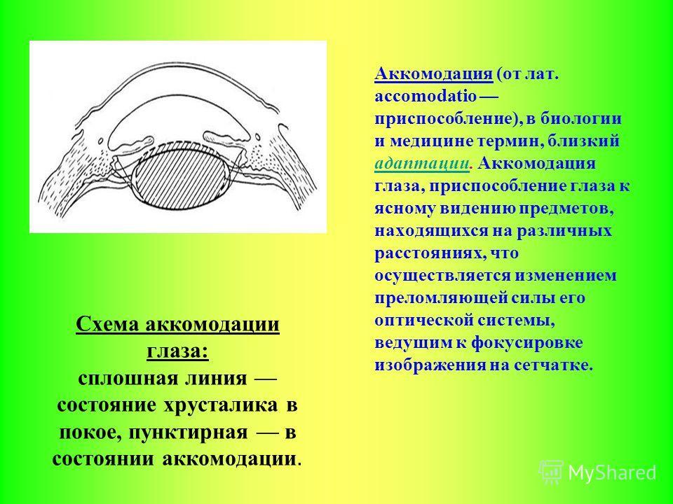 Схема аккомодации глаза: сплошная линия состояние хрусталика в покое, пунктирная в состоянии аккомодации. Аккомодация (от лат. accomodatio приспособление), в биологии и медицине термин, близкий адаптации. Аккомодация глаза, приспособление глаза к ясн