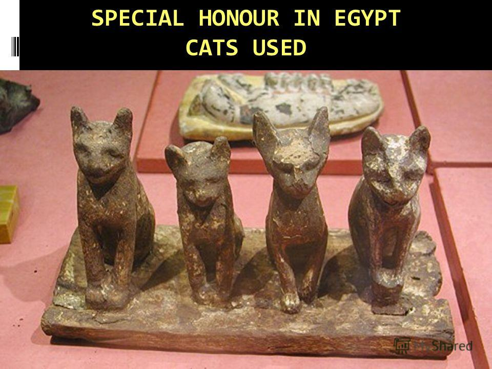 SPECIAL HONOUR IN EGYPT CATS USED
