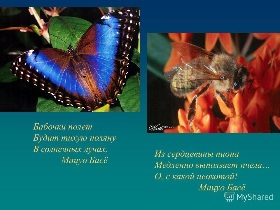 Бабочки полет Будит тихую поляну В солнечных лучах. Мацуо Басё Из сердцевины пиона Медленно выползает пчела… О, с какой неохотой! Мацуо Басё