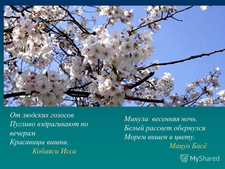 Минула весенняя ночь. Белый рассвет обернулся Морем вишен в цвету. Мацуо Басё От людских голосов Пугливо вздрагивают по вечерам Красавицы вишни. Кобаяси Исса