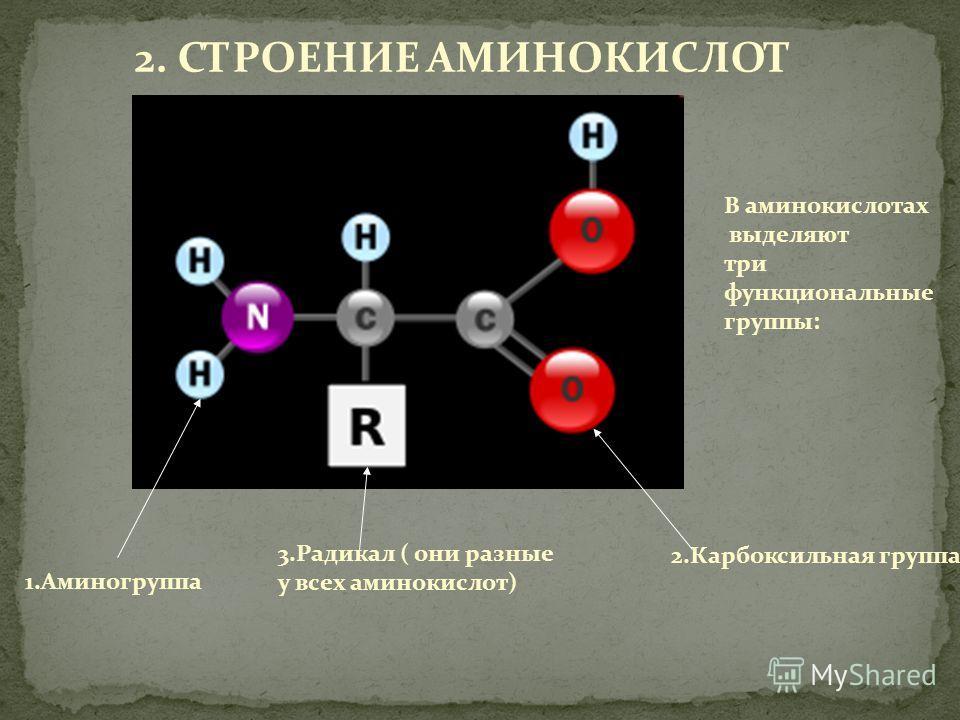 2. СТРОЕНИЕ АМИНОКИСЛОТ В аминокислотах выделяют три функциональные группы: 1.Аминогруппа 2.Карбоксильная группа 3.Радикал ( они разные у всех аминокислот)