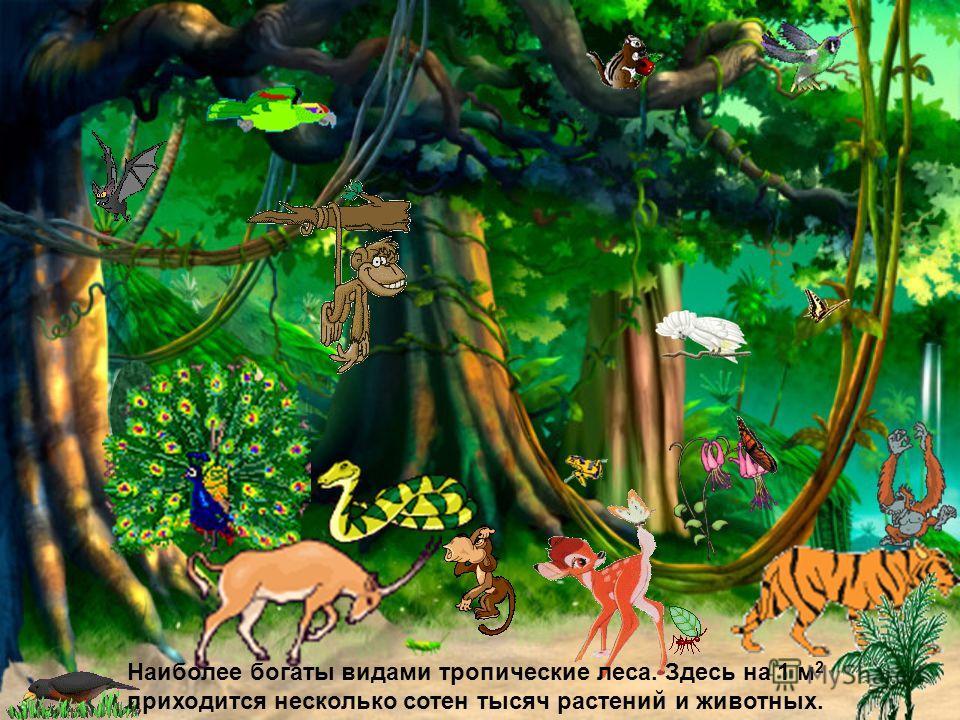 Наиболее богаты видами тропические леса. Здесь на 1 м 2 приходится несколько сотен тысяч растений и животных.