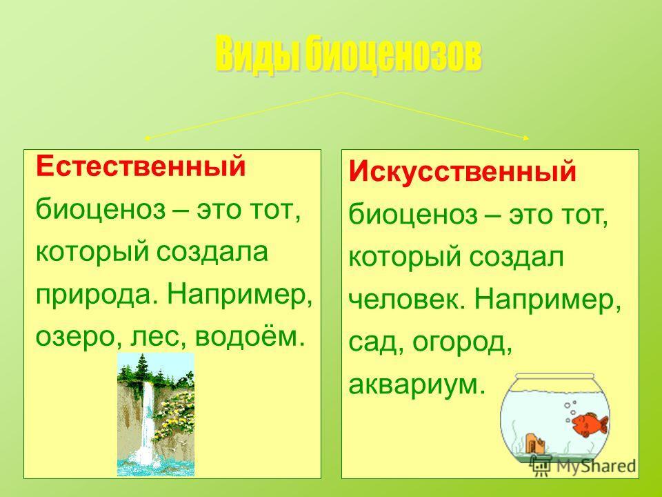 Естественный биоценоз – это тот, который создала природа. Например, озеро, лес, водоём. Искусственный биоценоз – это тот, который создал человек. Например, сад, огород, аквариум.
