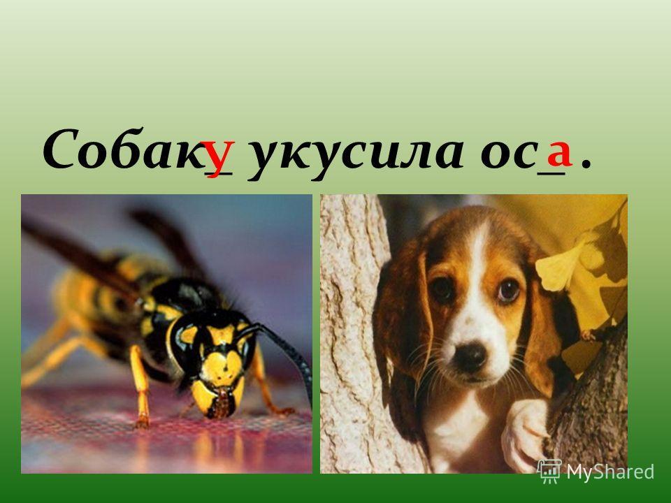Собак_ укусила ос_. У а