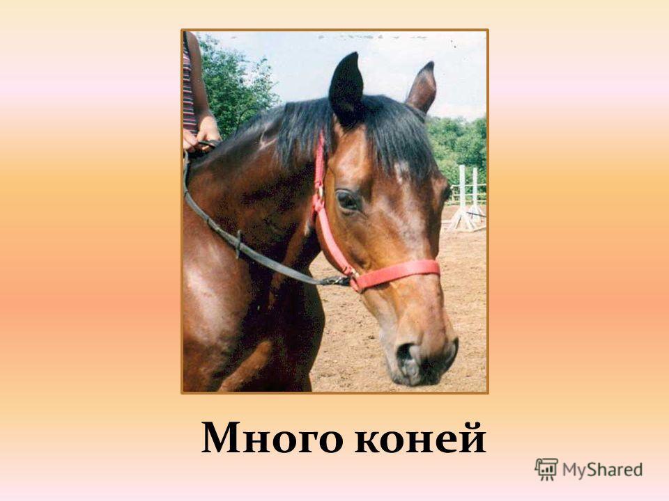 Много коней