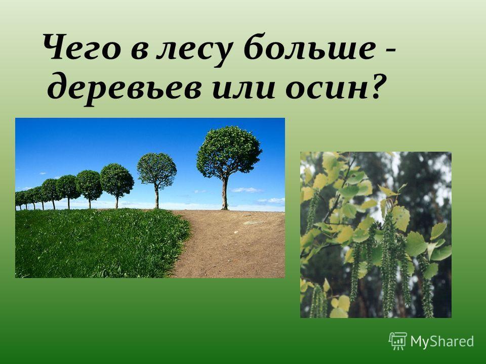Чего в лесу больше - деревьев или осин?
