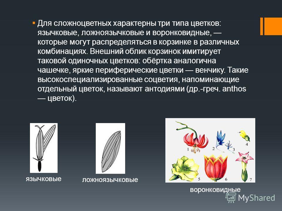 Для сложноцветных характерны три типа цветков: язычковые, ложноязычковые и воронковидные, которые могут распределяться в корзинке в различных комбинациях. Внешний облик корзинок имитирует таковой одиночных цветков: обёртка аналогична чашечке, яркие п