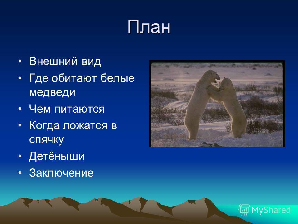 План Внешний вид Где обитают белые медведи Чем питаются Когда ложатся в спячку Детёныши Заключение