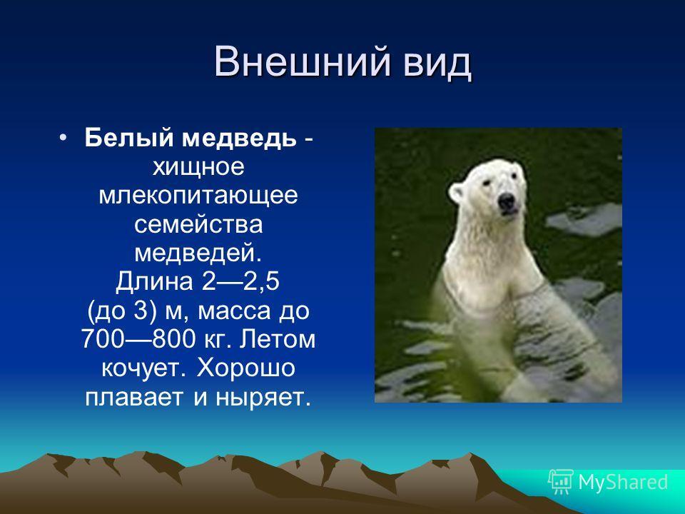 Внешний вид Белый медведь - хищное млекопитающее семейства медведей. Длина 22,5 (до 3) м, масса до 700800 кг. Летом кочует. Хорошо плавает и ныряет.