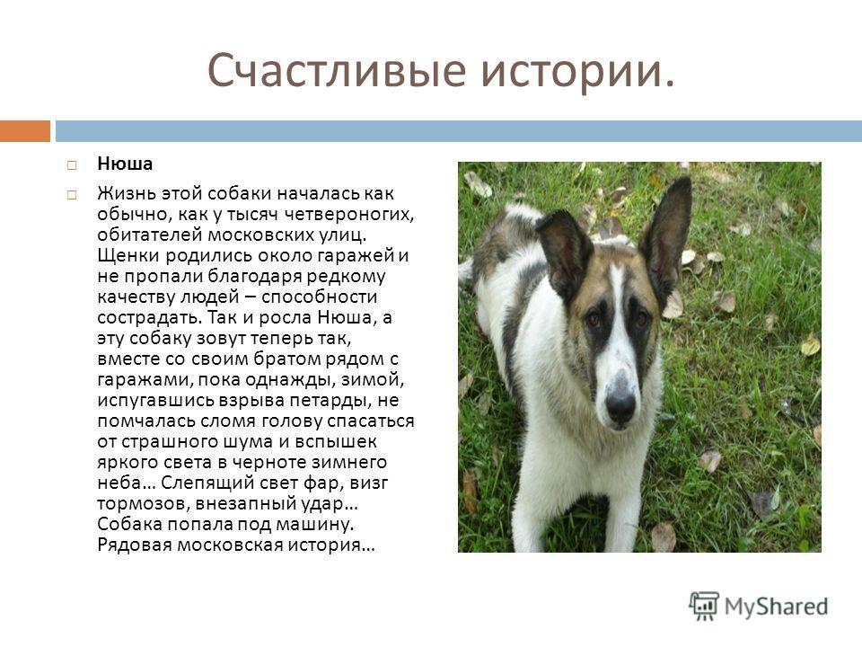 Нюша Жизнь этой собаки началась как обычно, как у тысяч четвероногих, обитателей московских улиц. Щенки родились около гаражей и не пропали благодаря редкому качеству людей – способности сострадать. Так и росла Нюша, а эту собаку зовут теперь так, вм