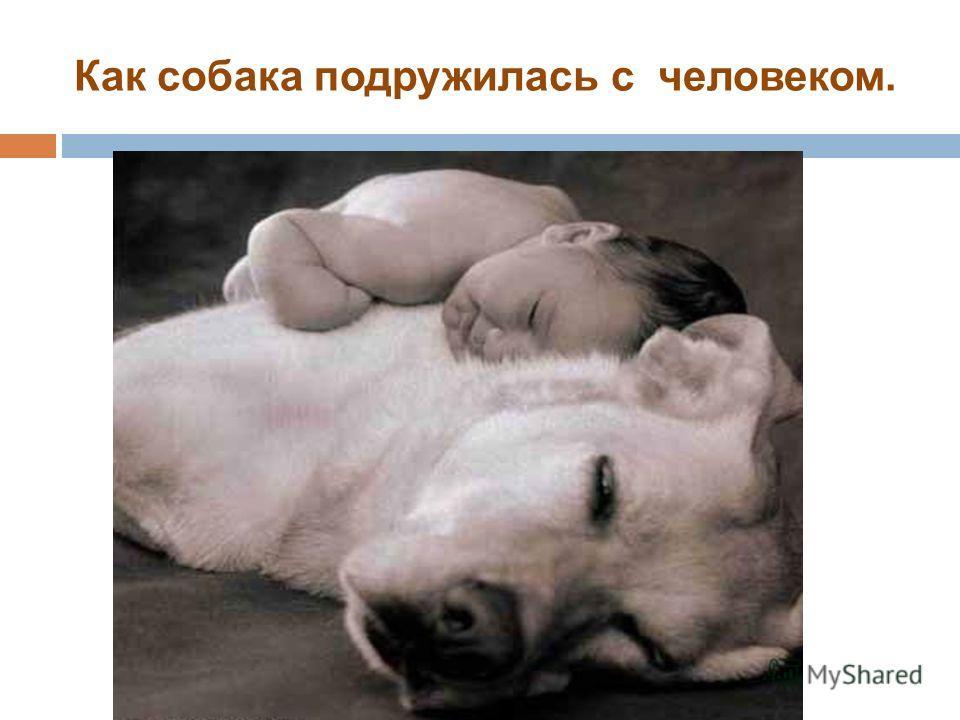 Как собака подружилась с человеком.
