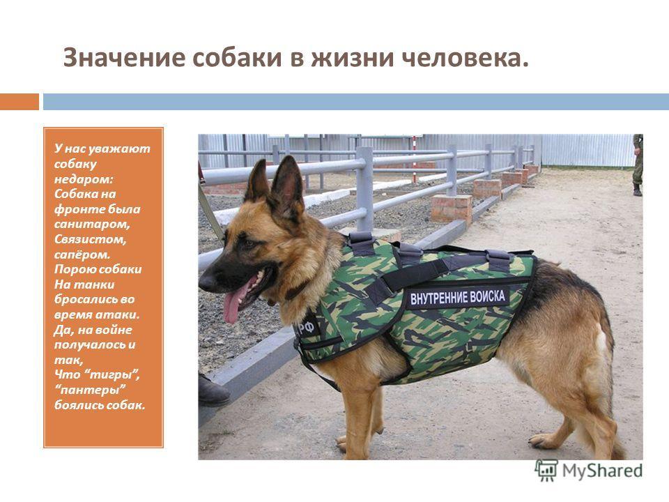 Значение собаки в жизни человека. У нас уважают собаку недаром : Собака на фронте была санитаром, Связистом, сапёром. Порою собаки На танки бросались во время атаки. Да, на войне получалось и так, Что тигры, пантеры боялись собак.