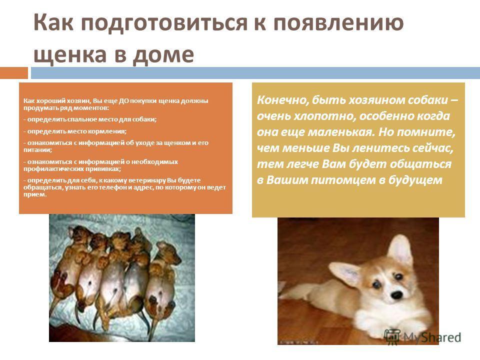 Как подготовиться к появлению щенка в доме Как хороший хозяин, Вы еще ДО покупки щенка должны продумать ряд моментов : - определить спальное место для собаки ; - определить место кормления ; - ознакомиться с информацией об уходе за щенком и его питан