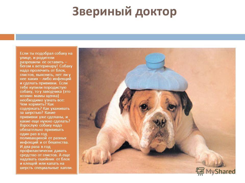Звериный доктор Если ты подобрал собаку на улице, и родители разрешили ее оставить – бегом к ветеринару ! Собаку надо пролечить от блох, глистов, выяснить, нет ли у нее каких – либо инфекций и сделать прививки. Если тебе купили породистую собаку, то