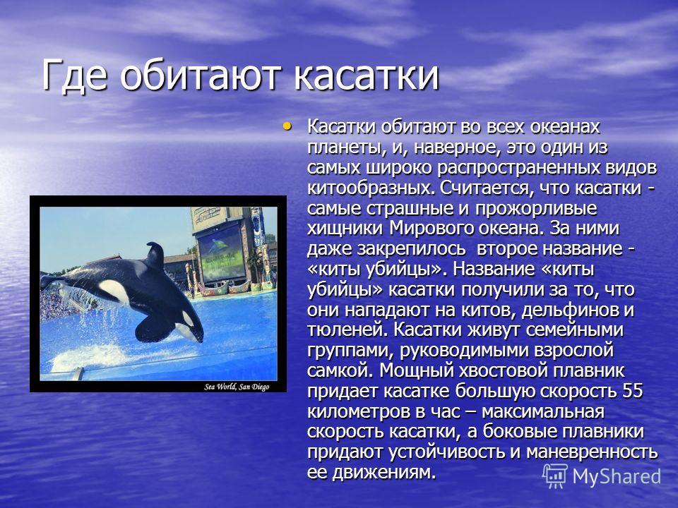 Где обитают касатки Касатки обитают во всех океанах планеты, и, наверное, это один из самых широко распространенных видов китообразных. Считается, что касатки - самые страшные и прожорливые хищники Мирового океана. За ними даже закрепилось второе наз