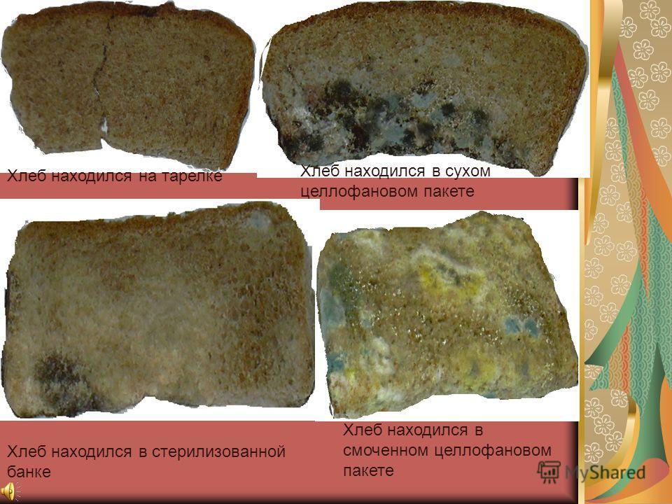 Фотографии после наблюдений Хлеб находился на тарелке Хлеб находился в сухом целлофановом пакете Хлеб находился в стерилизованной банке Хлеб находился в смоченном целлофановом пакете