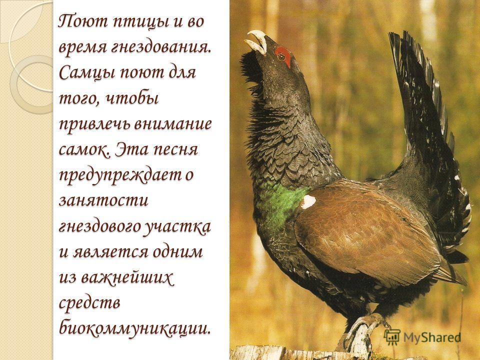 Поют птицы и во время гнездования. Самцы поют для того, чтобы привлечь внимание самок. Эта песня предупреждает о занятости гнездового участка и является одним из важнейших средств биокоммуникации.