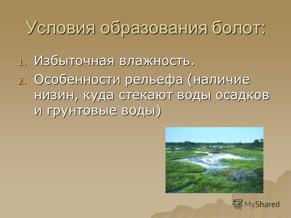 Условия образования болот: 1. Избыточная влажность. 2. Особенности рельефа (наличие низин, куда стекают воды осадков и грунтовые воды)