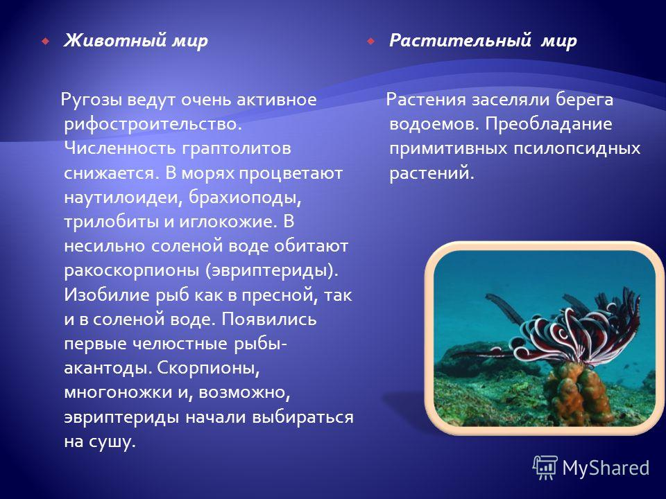 Животный мир Ругозы ведут очень активное рифостроительство. Численность граптолитов снижается. В морях процветают наутилоидеи, брахиоподы, трилобиты и иглокожие. В несильно соленой воде обитают ракоскорпионы (эвриптериды). Изобилие рыб как в пресной,