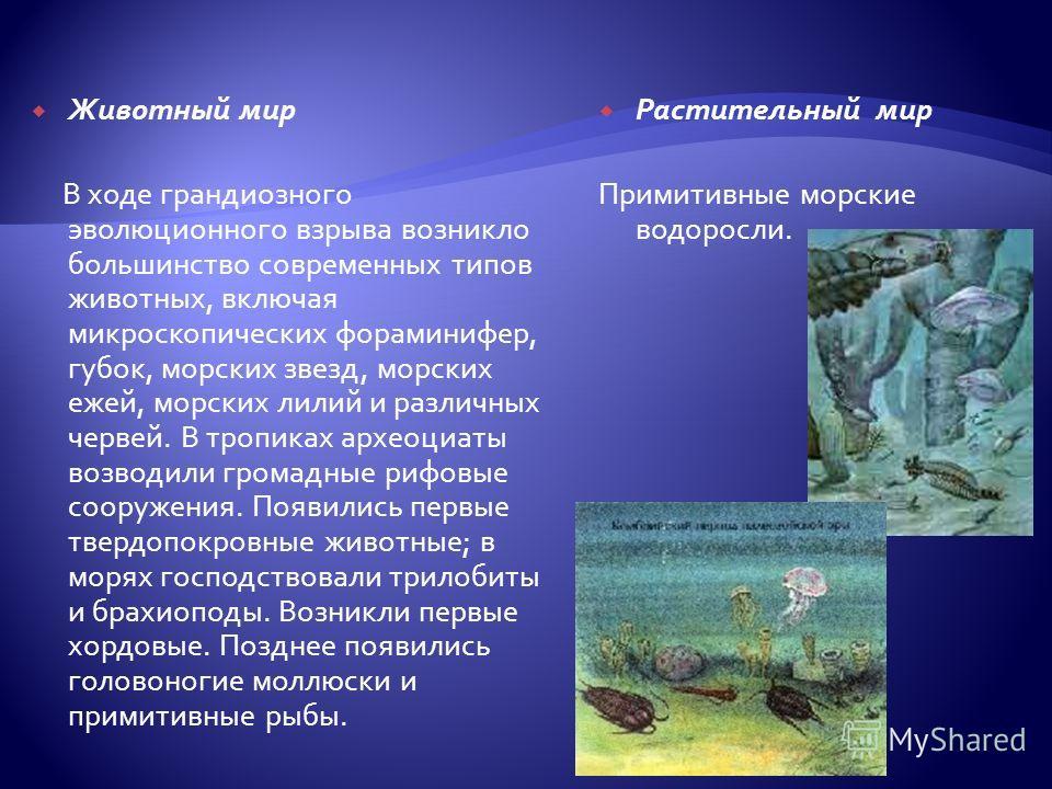 Животный мир В ходе грандиозного эволюционного взрыва возникло большинство современных типов животных, включая микроскопических фораминифер, губок, морских звезд, морских ежей, морских лилий и различных червей. В тропиках археоциаты возводили громадн
