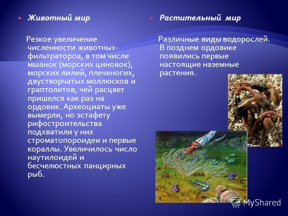 Растительный мир Различные виды водорослей. В позднем ордовике появились первые настоящие наземные растения. Животный мир Резкое увеличение численности животных- фильтраторов, в том числе мшанок (морских циновок), морских лилий, плеченогих, двустворч