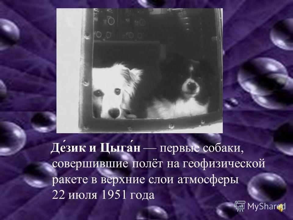Де́зик и Цыга́н первые собаки, совершившие полёт на геофизической ракете в верхние слои атмосферы 22 июля 1951 года