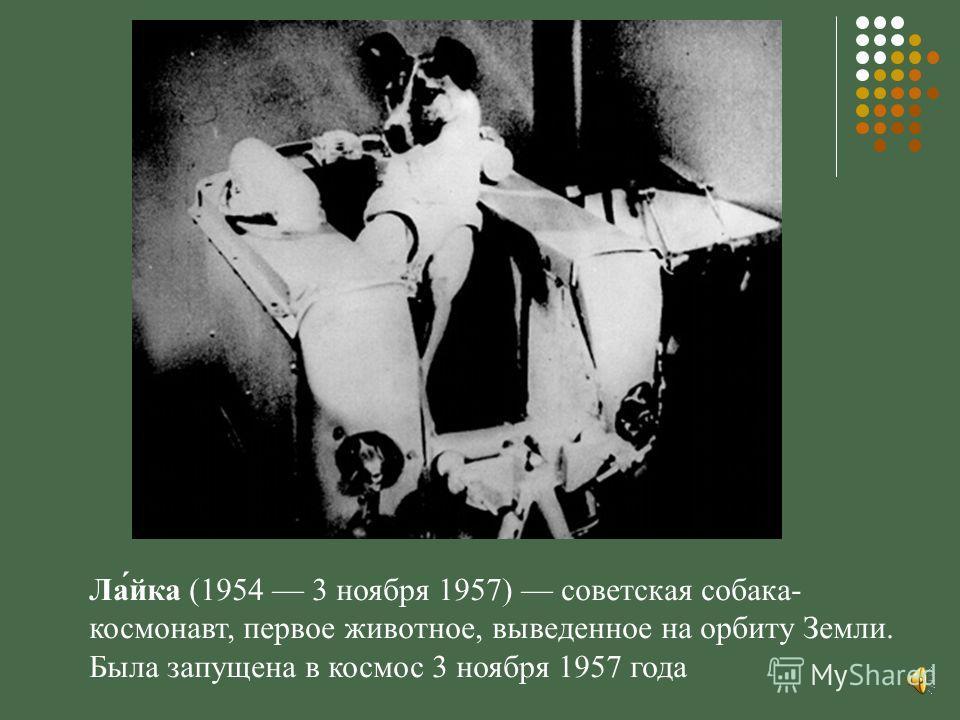 Ла́йка (1954 3 ноября 1957) советская собака- космонавт, первое животное, выведенное на орбиту Земли. Была запущена в космос 3 ноября 1957 года