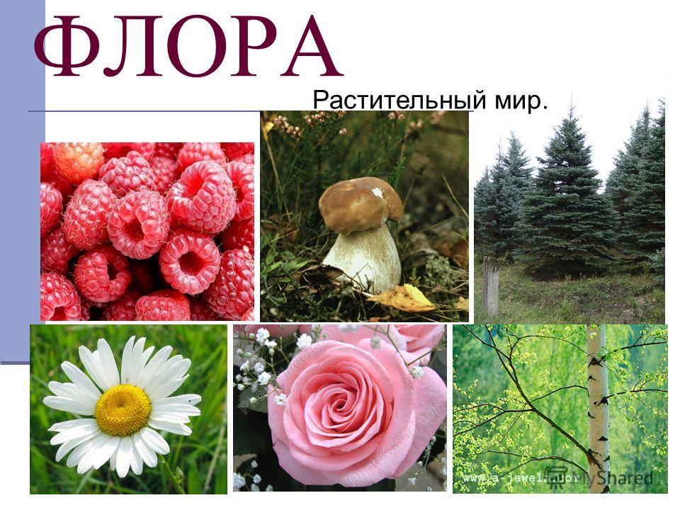 ФЛОРА Растительный мир.