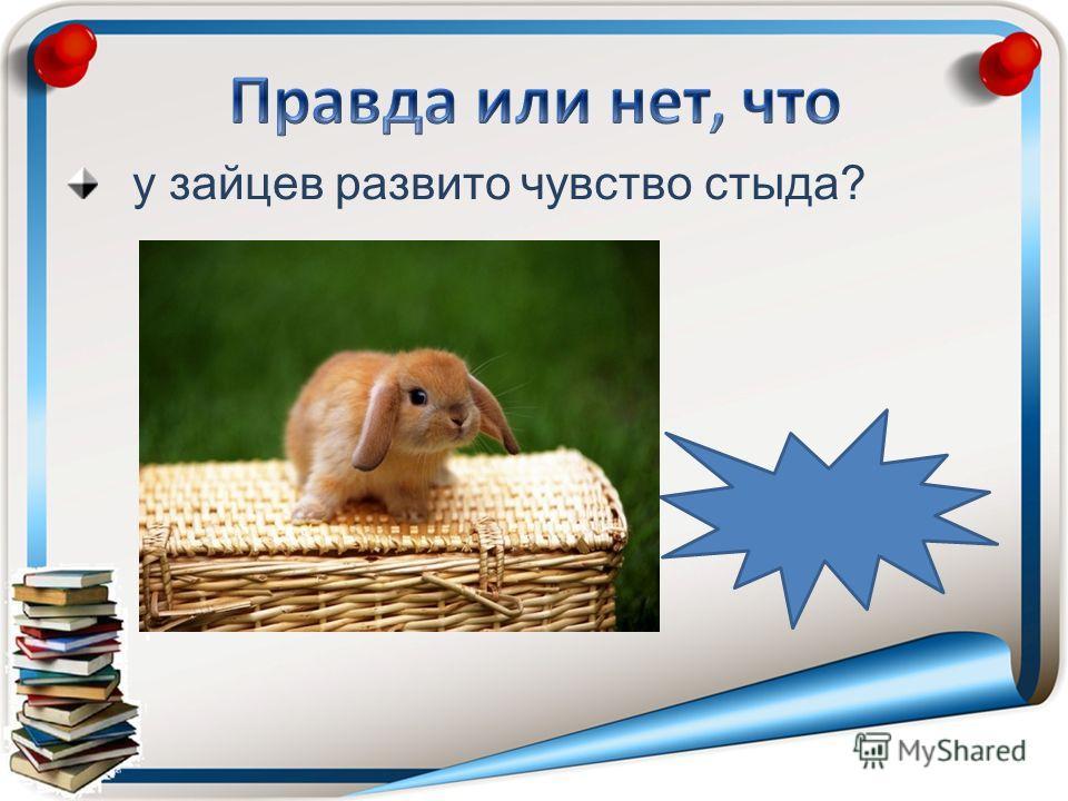 у зайцев развито чувство стыда?