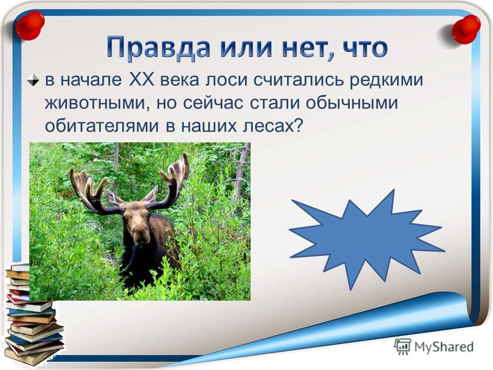 в начале ХХ века лоси считались редкими животными, но сейчас стали обычными обитателями в наших лесах?