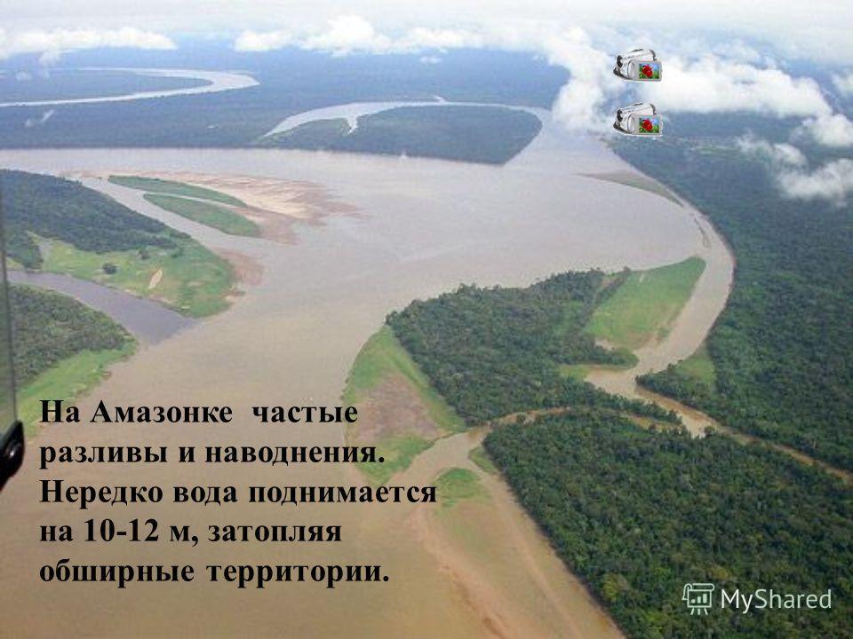 На Амазонке частые разливы и наводнения. Нередко вода поднимается на 10-12 м, затопляя обширные территории.
